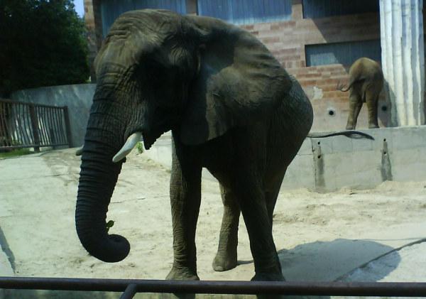 Zoo Bojnice állatkert