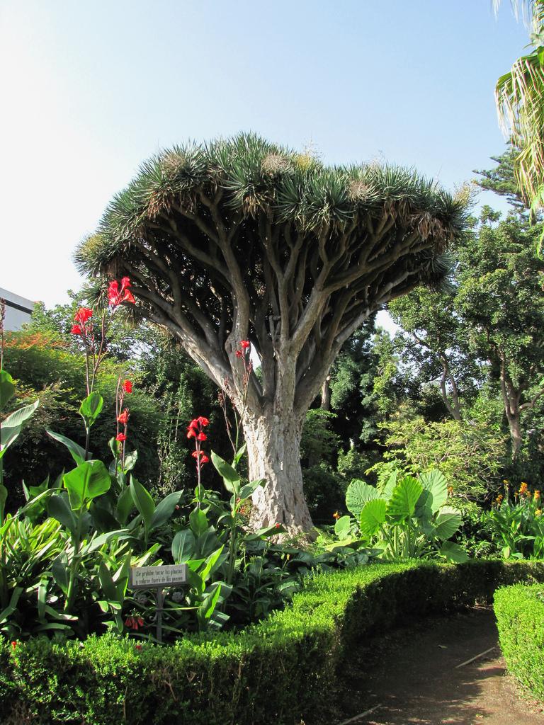 Botanikus kert
